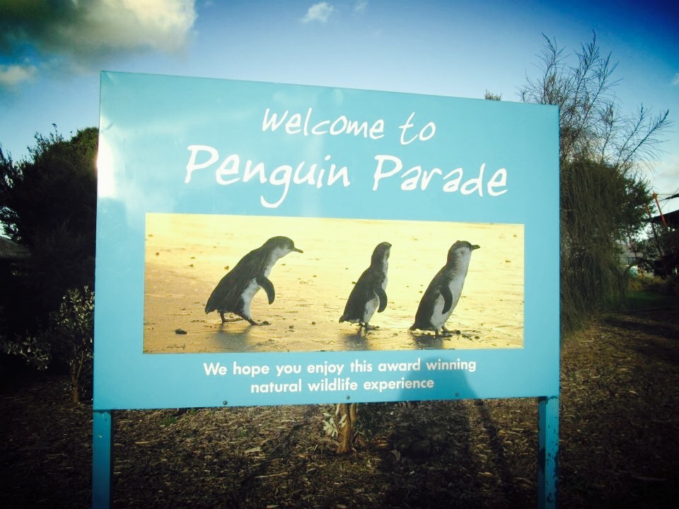 Australia: Little Penguin Parade Evening Tour, Phillip Island