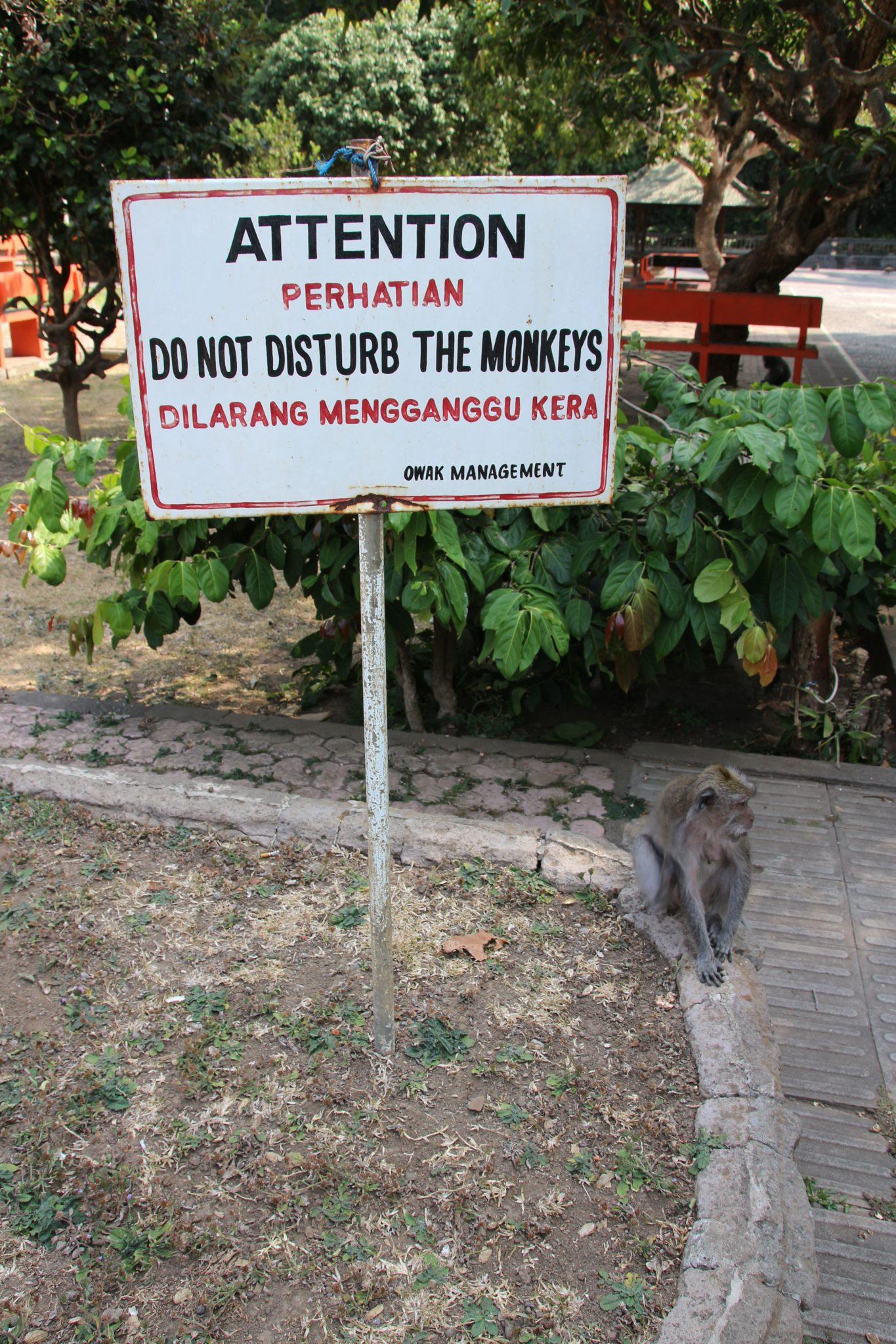 Do Not Disturb Monkeys at Alas Kedaton Monkey Forest