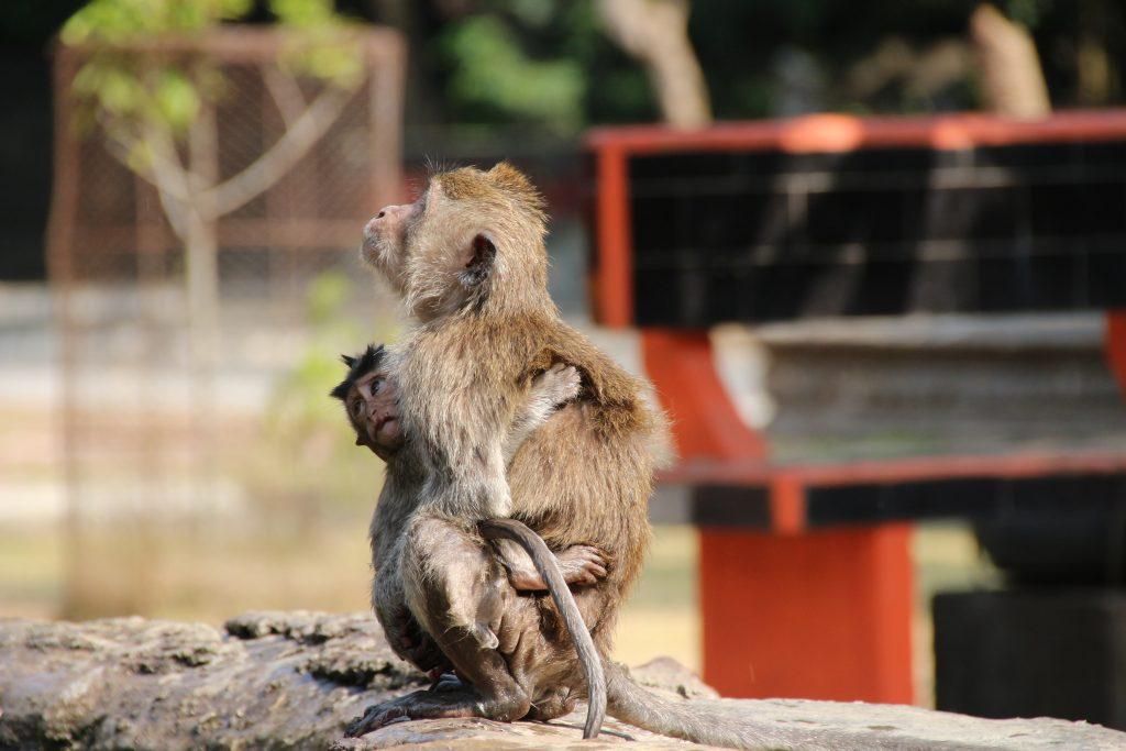 Bali: Alas Kedaton Monkey Forest, Tabanan