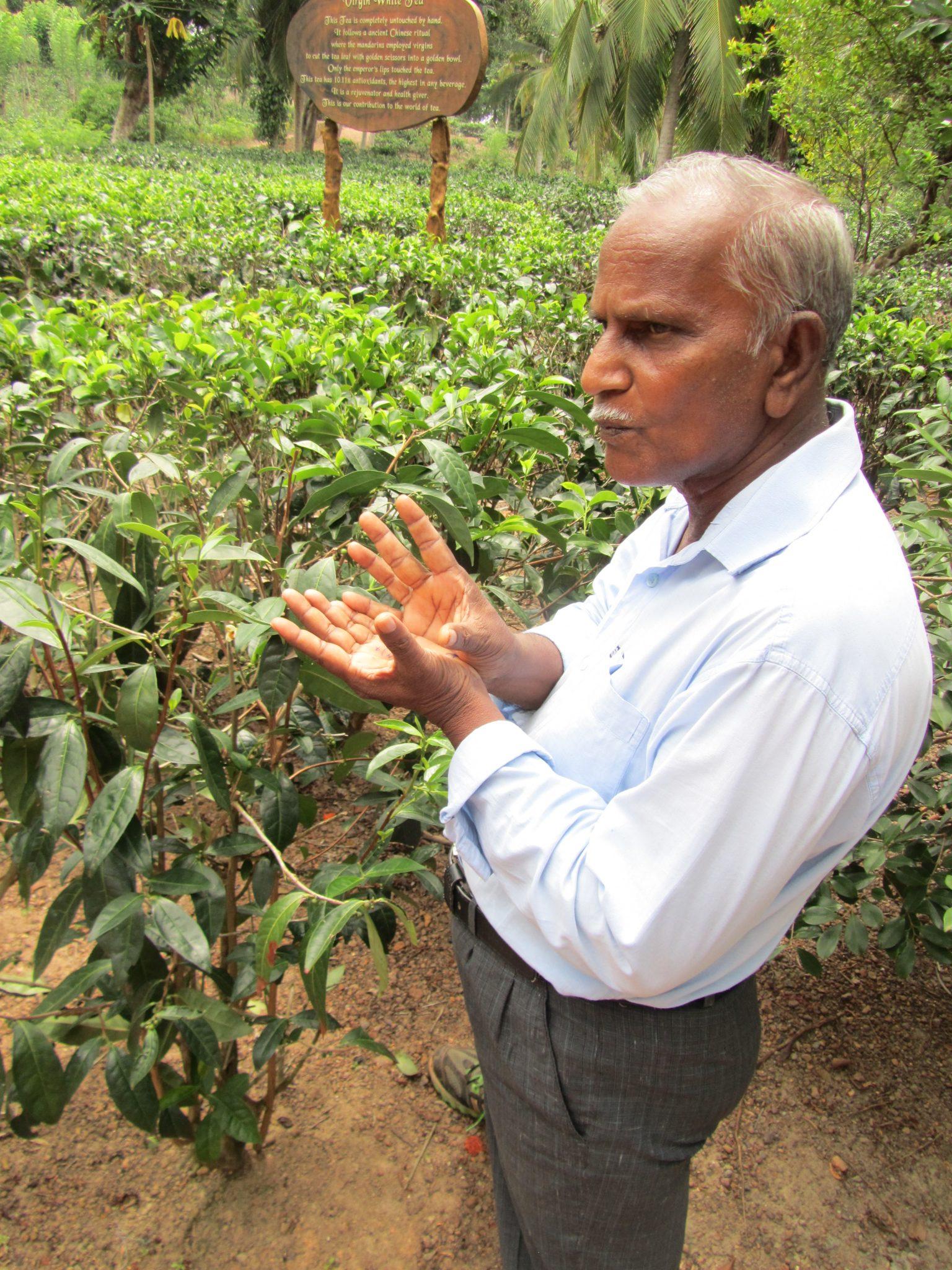 Xavier at Handunugoda Tea Plantation, Sri Lanka