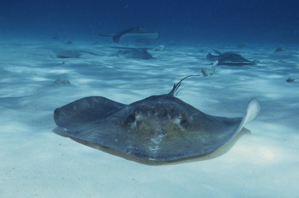 Plenty More Fish in the Sea: Top Travel Destinations for the Avid Diver