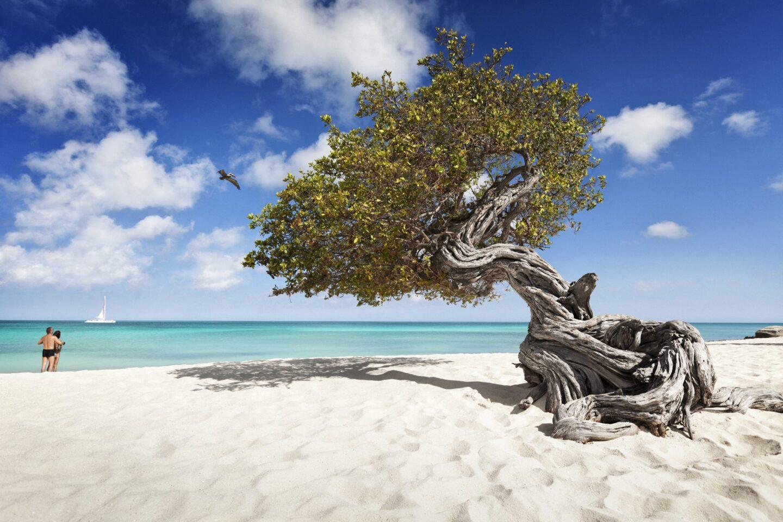 Aruba: Top 5 Romantic Activities For Couples