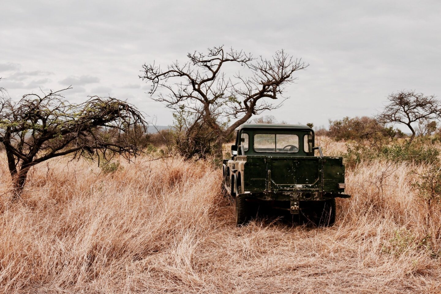 Africa: Things to Avoid When Doing a Self-Drive Safari