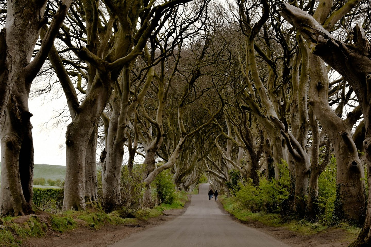 The Dark Hedges, Northern Ireland, UK
