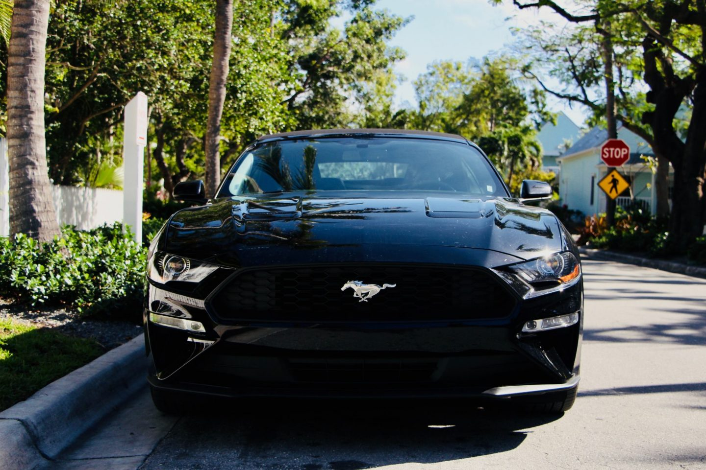Hire A Mustang in Florida, USA